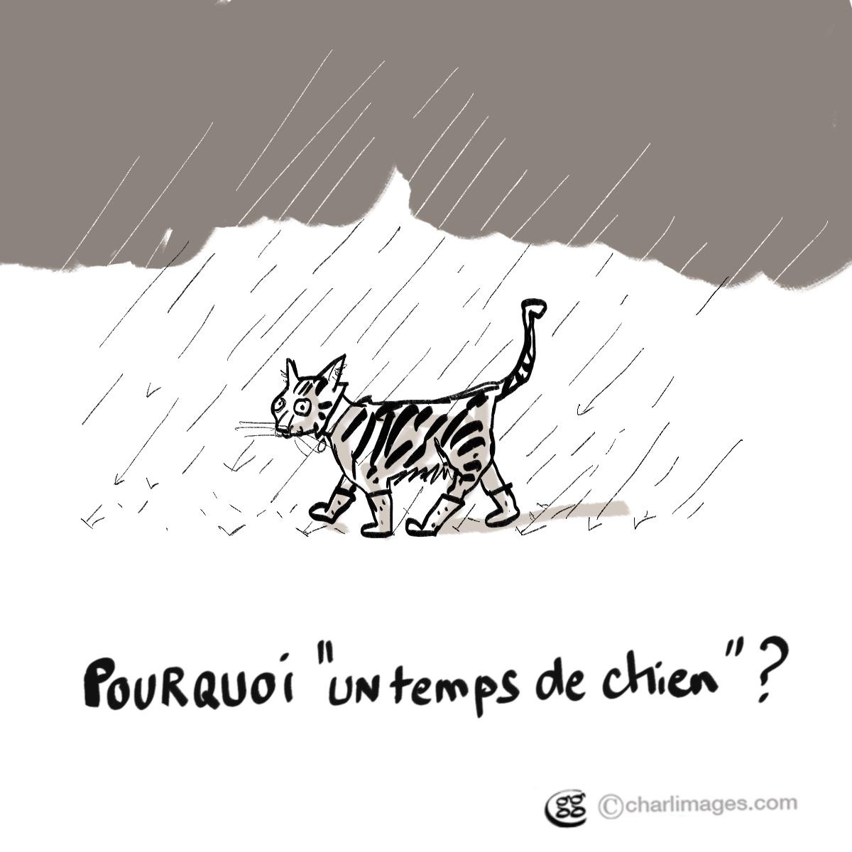 Pas un chat ?